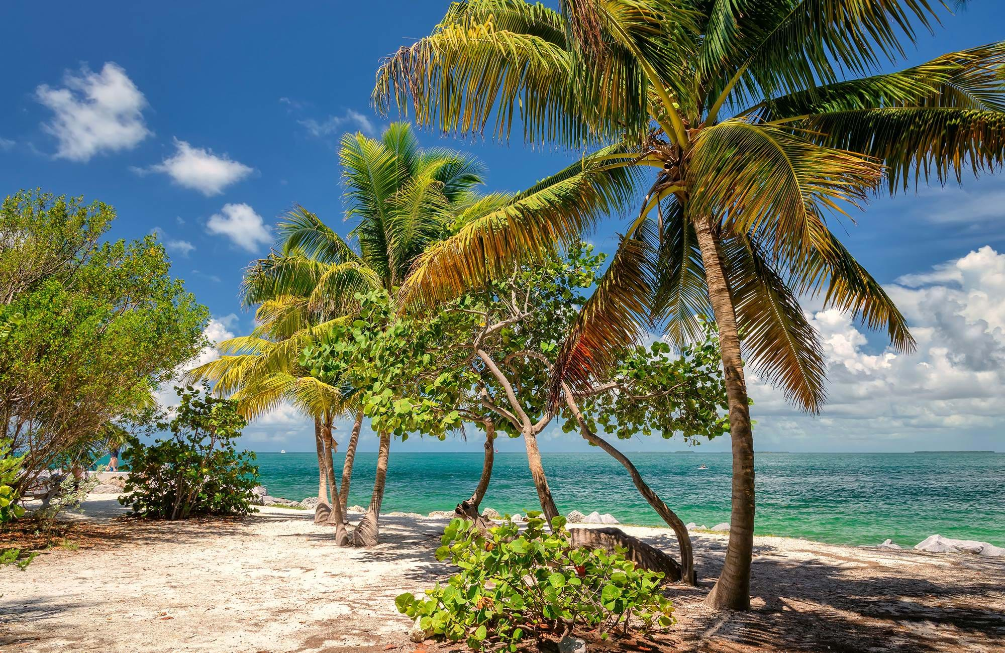 florida-key-west-palm-trees-cover
