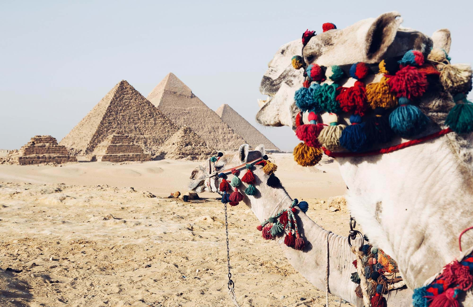 egypt-africa-camels-cover