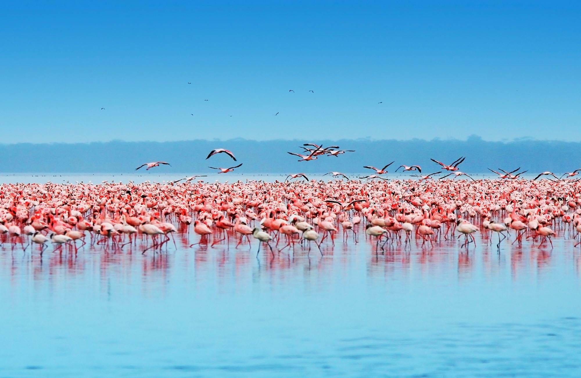kenya-lake-nakuru-national-park-flamingos-cover
