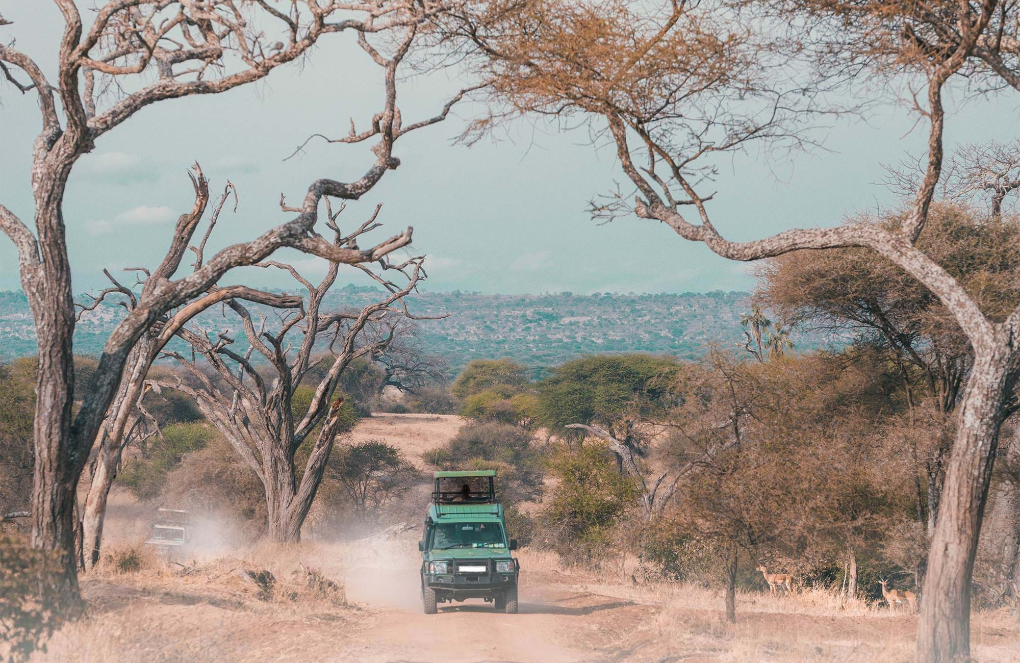 serengeti-tanzania-safari-drive-car-cover