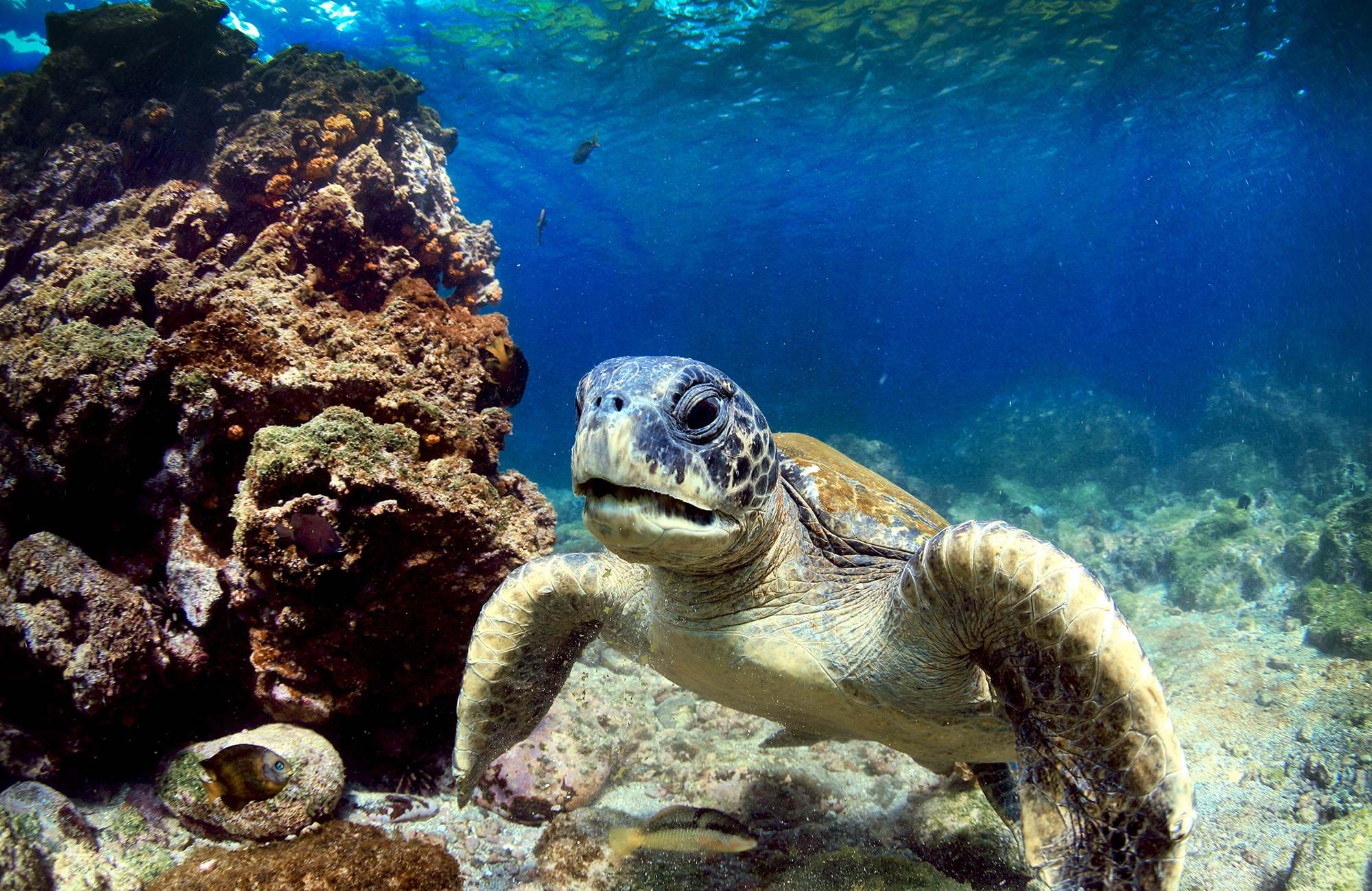 galapagos-islands-ecuador-sea-turtle-volcanic-rocks-underwater