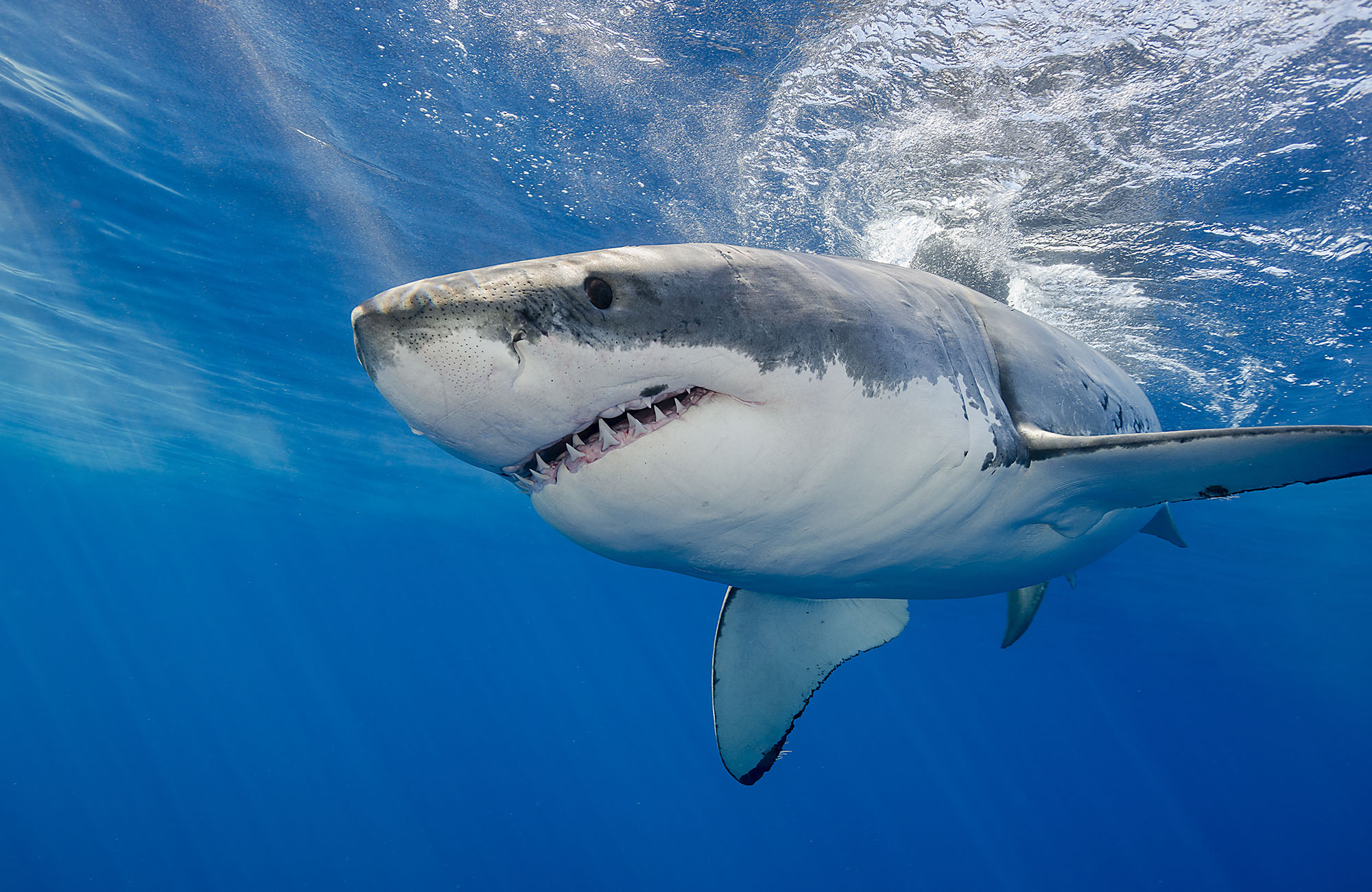 это фото или картинки акул отличный способ