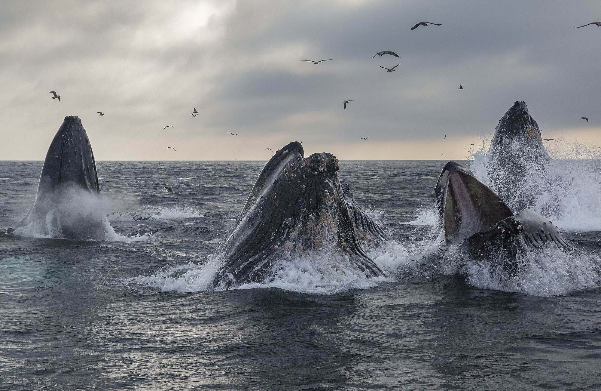 whale-watching-monterey-california