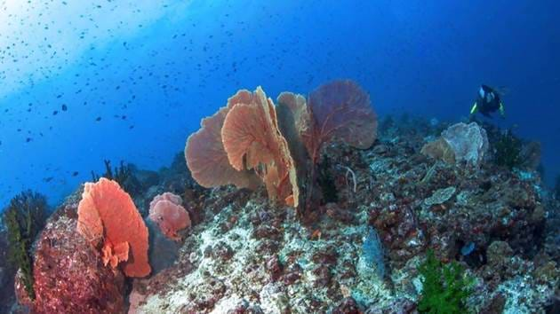Pulau_Weh_Diving-065