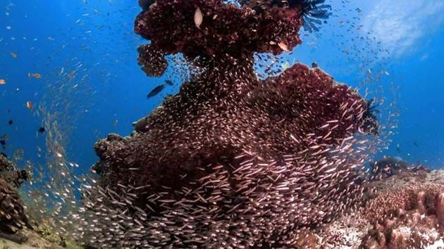 Pulau_Weh_Diving-064
