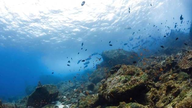 Pulau_Weh_Diving-013