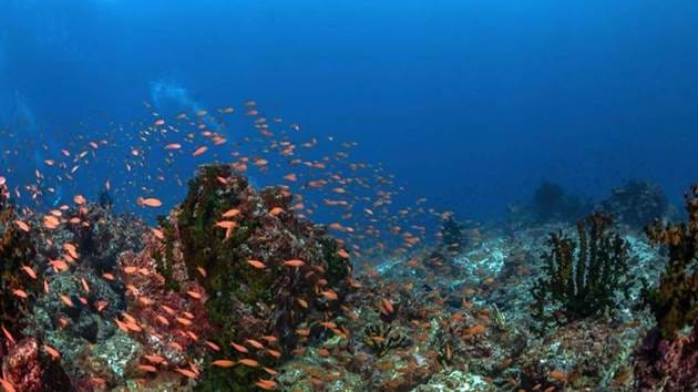 Pulau_Weh_Diving-067