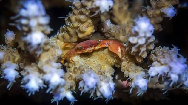 Pulau_Weh_Diving-023